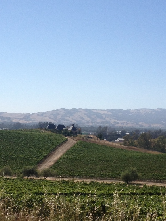 Vineyards in Napa, CA
